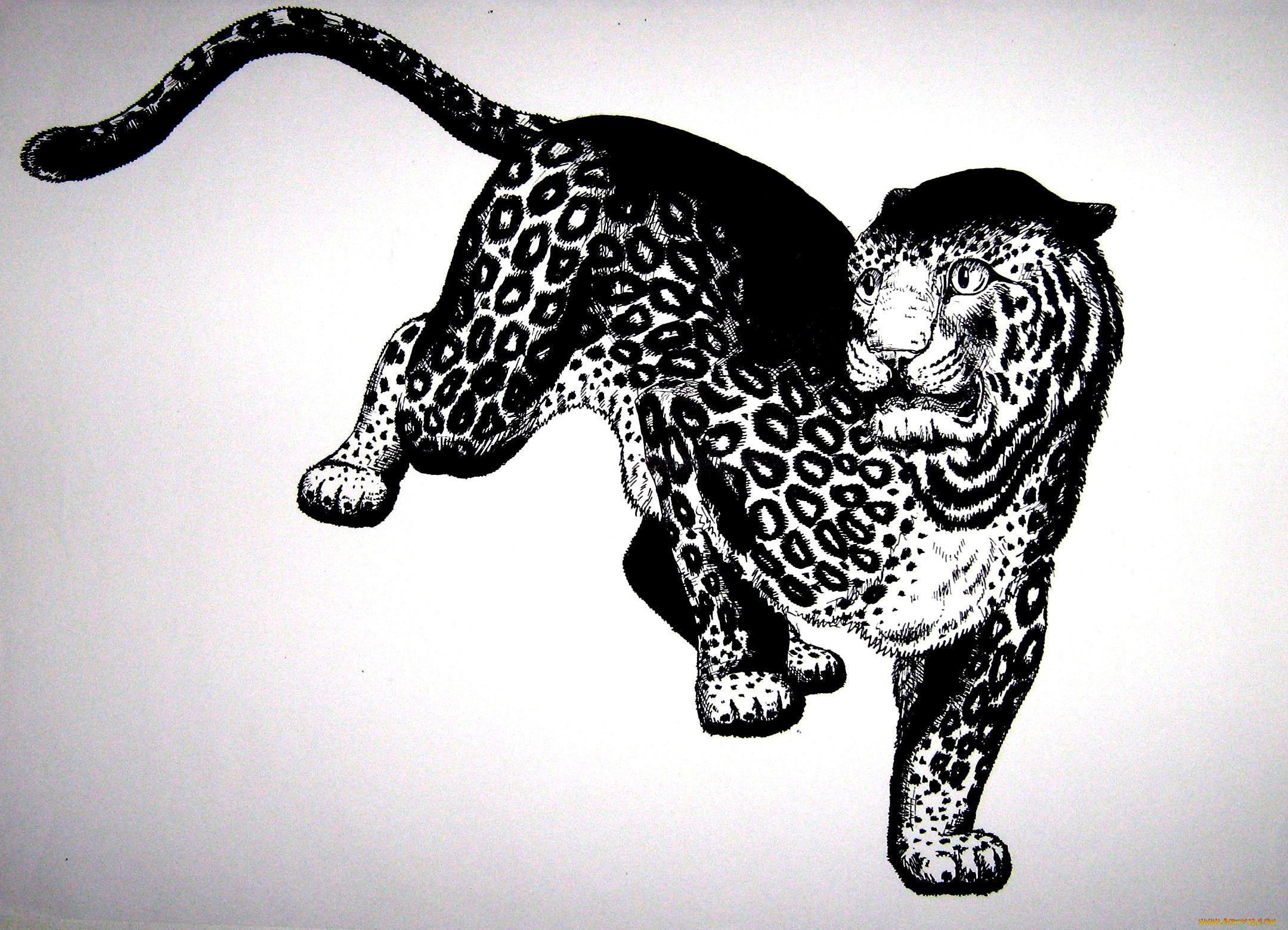 картинки кошки ягуар графика корсаковской црб